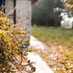 giardin-con-foglie